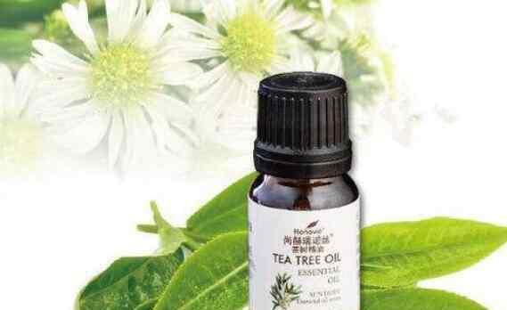 茶树精油的功效与作用 茶树精油怎么用 茶树精油的功效与作用